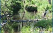 Moggill Creek near Rafting Ground Road