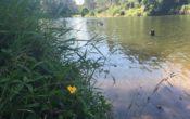 Bunya Crossing Reserve