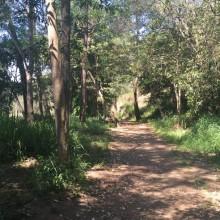 Bunya walking trails