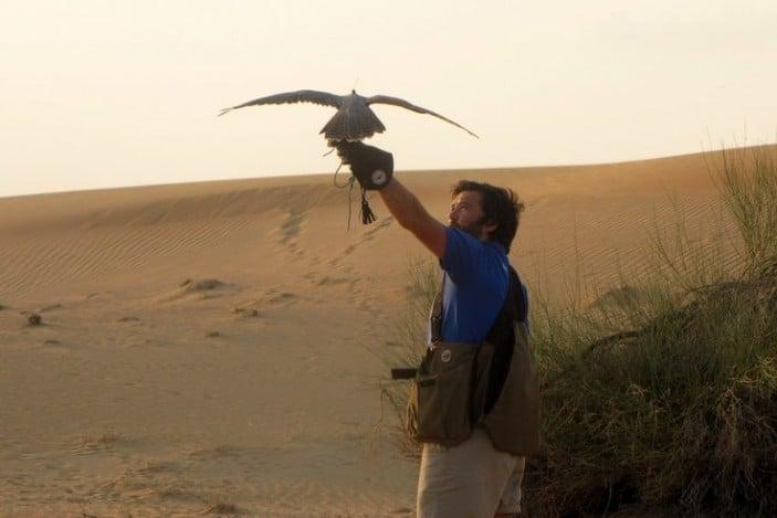 Arabian Adventures Falcon Show