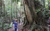 kids walks at mount glorious