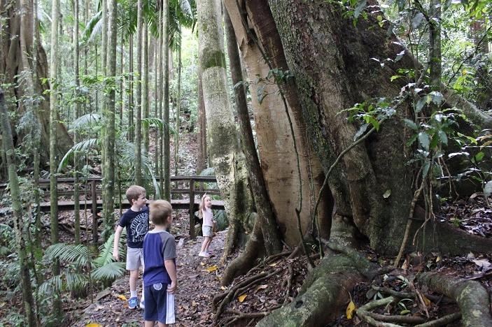kids walks at mount glorious