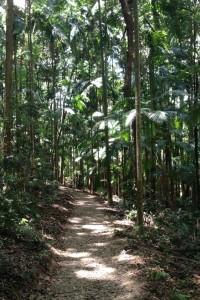 Kondalilla Falls, Montville, Sunshine Coast