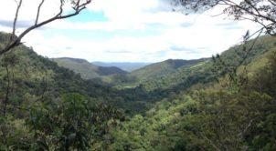 Kondalilla National Park Picnic Circuit Lookout