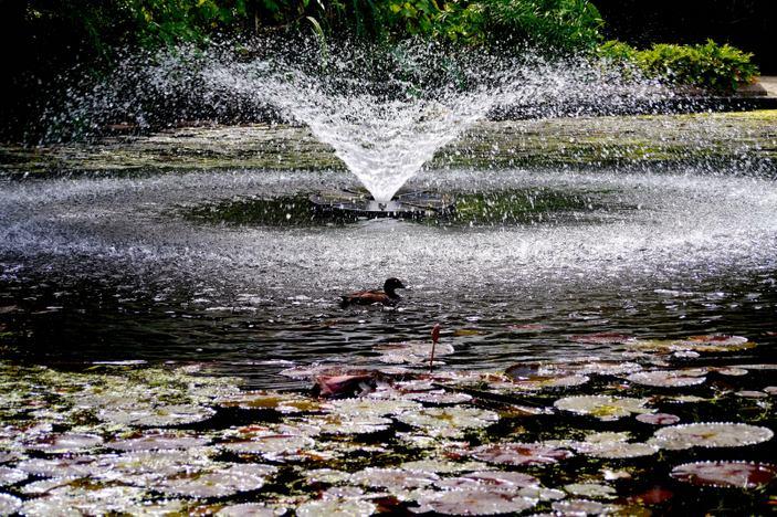 garden ponds brisbane waterscapes australia streams ponds and