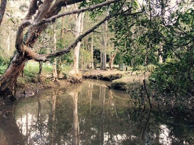 Bunyaville Regional Park