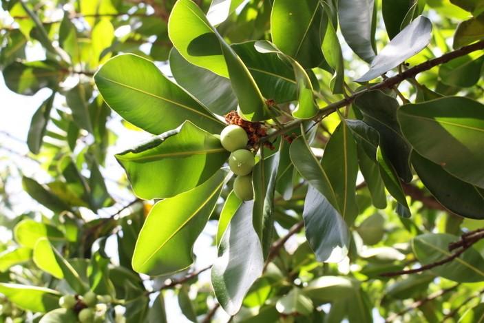 bush tucker in Brisbane