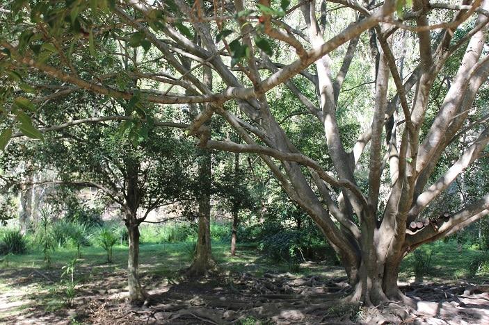 shady picnic area bunyaville