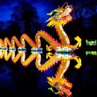 chinese-dragon-gold-coast-festival-of-lights