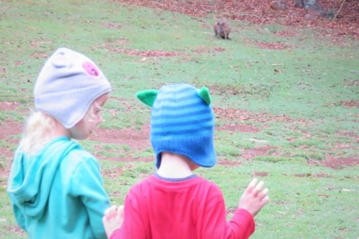Visit Springbrook National Park With Kids Brisbane Kids