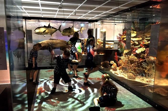 wild side gallery queensland museum