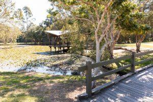 beenleigh pond ducks