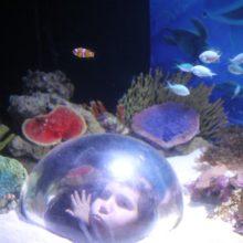 Sea Life Aquarium Sunshine Coast
