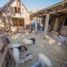 sandstone point farm animal play