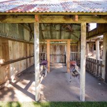 sandstone point barn