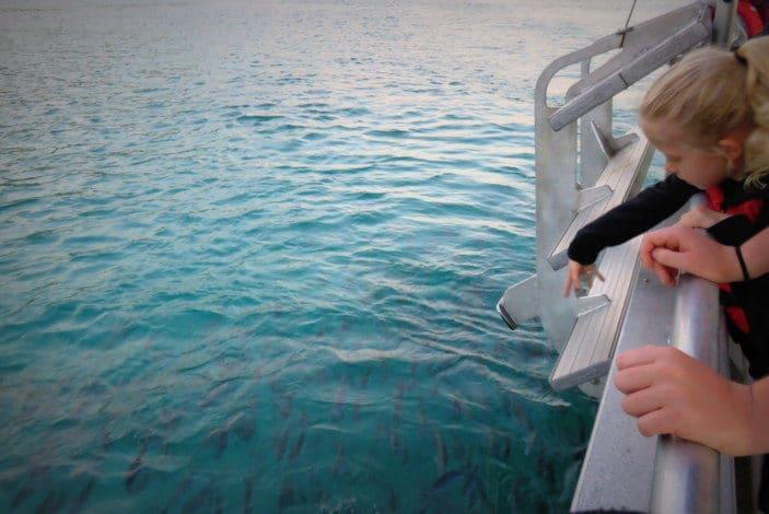 Feeding fish from a boat
