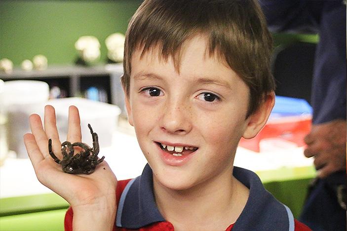 Boy holding tarantula
