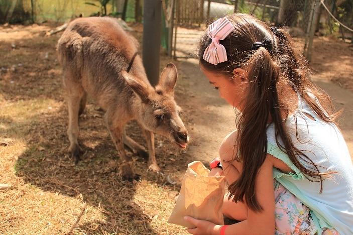 Kangaroo Feeding at Big Pineapple
