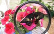 Gold Coast Butterflies