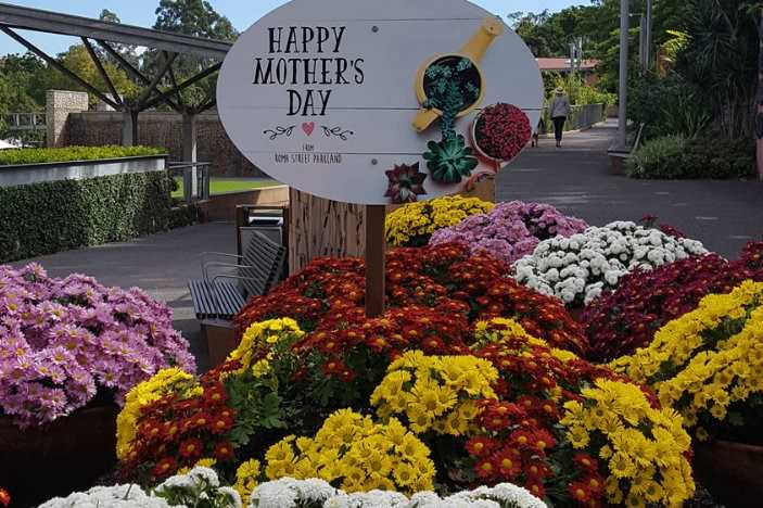 colourful flowers, happy mothers day sign, roma street parkland, gardens, flower gardens