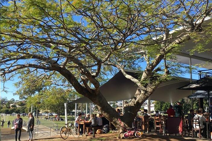 Large shady tree over cafe
