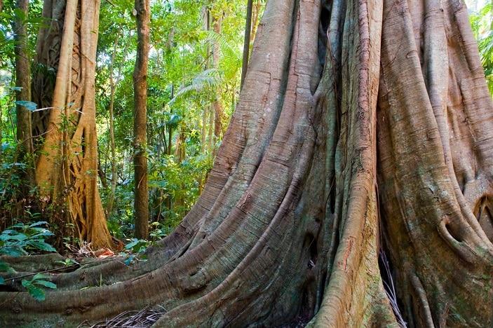 Tamborine National Park, Queensland, Australia, Pacific