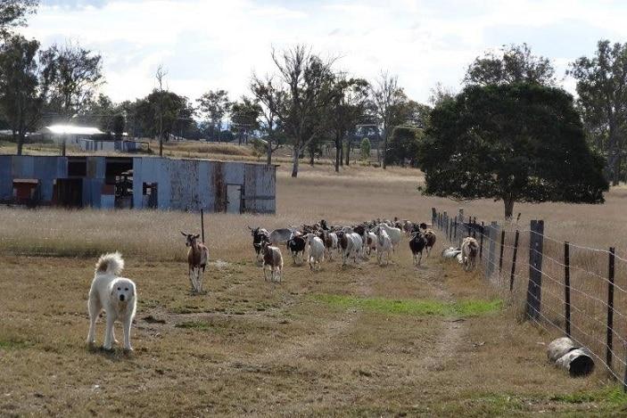 naughty little kids goat farm