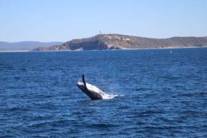 Tangalooma Island Resort, Tangalooma Whale Watching Cruise, whale watching, Moreton Island