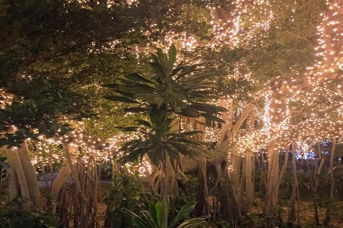 Fairy lights near Goodwill Bridge