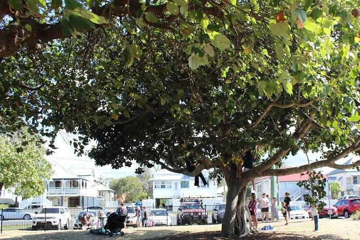 trees in arthur david park