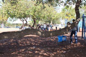 arthur davis park climbing trees