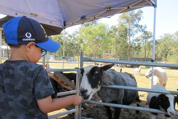 ipswich hobby farm goat feeding