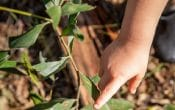 Child's hand pointing to leaf