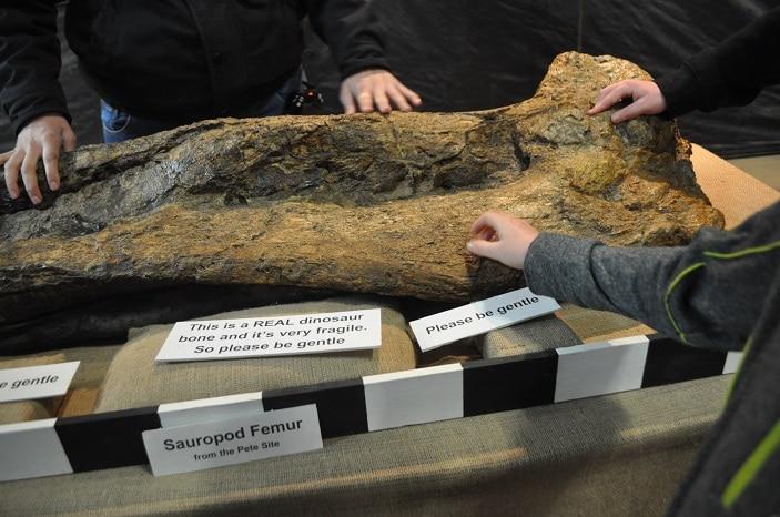 dinosaur sensory experience