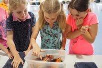 Ocean Life Education, incursions