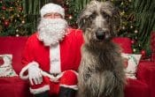SAnta paws, Santa nd dog Christmas photo