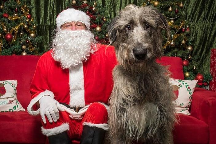 SAnta paws, Santa nd dog Christmas photo