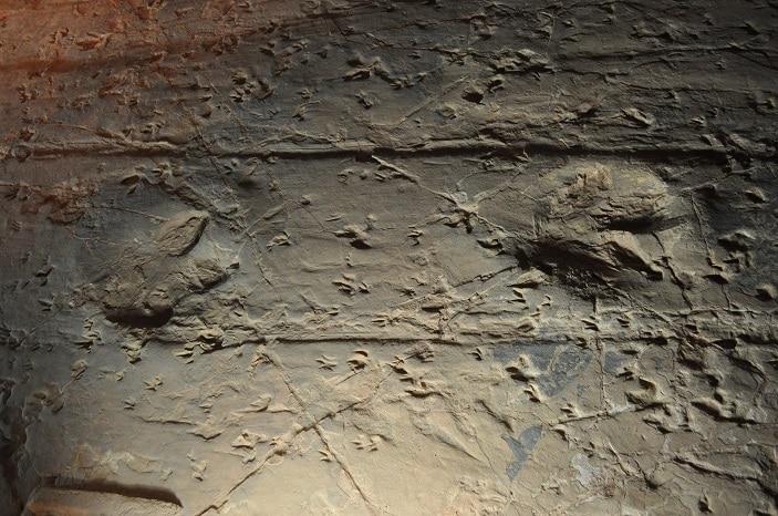 close up of dinosaur stampede