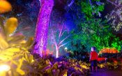 Christmas in Brisbane Enchanted Garden, rainbow light trees, boy looking at illuminated trees