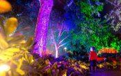 Christmas in Brisbane Enchanted Garden, rainbow light trees, boy looking at illuminated trees