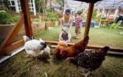 West village eco kids chicken coup