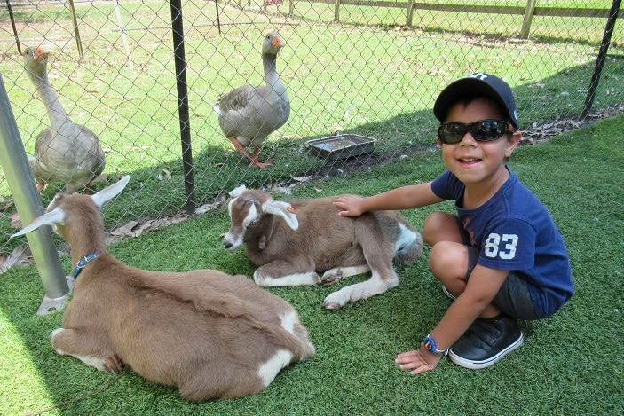 baby goat, petting zoo, animal farm