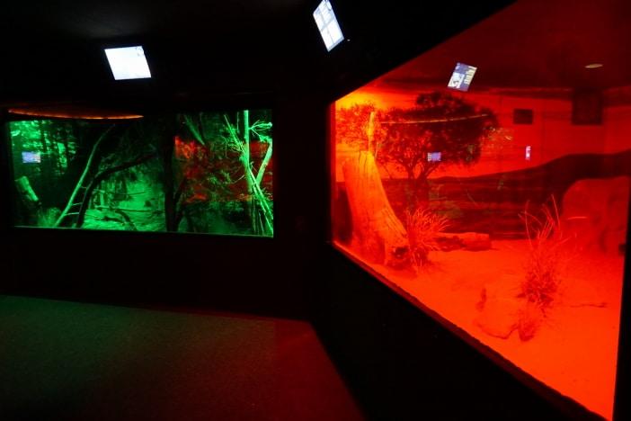 Nocturnal House, David Fleay Wildlife Park