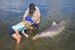 Girl feeding dolphin