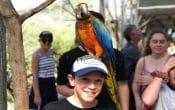 Boy at Bird World Maleny with bird sitting on his head