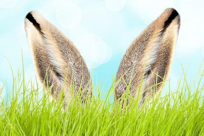 Meet the easter bunny ears