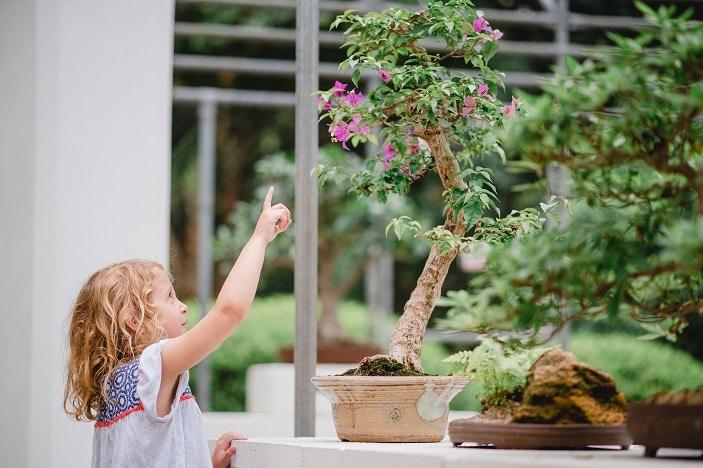 Girl looking at plant at Mount Coot-tha Botanic Gardens