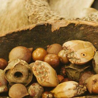 Aboriginal Games and Crafts Brisbane Botanic Gardens, seeds in bowl