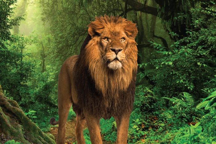 Jungle Workshops Strathpine Centre, Lion in the jungle