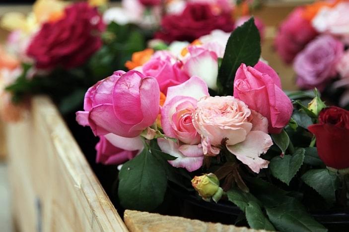 flower markets brisbane